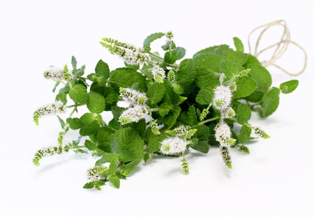 Bouquet of the wild Peppermint photo