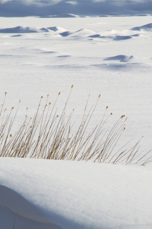 "Snow frozen lake and ""Karesusuki"" Withered pampas grass Stock Photo - 15938788"