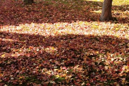 dead leaves: Antecedentes de las hojas muertas