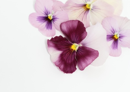 Background _ Valentine s Day image of the pansy photo