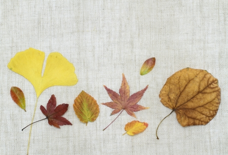 Image background of the arrangement _ late fall of dead leaves
