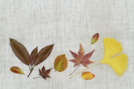 dead leaves: Imagen de fondo de la disposici�n _ finales del oto�o de las hojas muertas