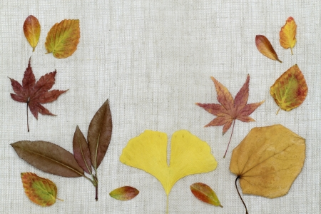 late fall: Image background of the arrangement _ late fall of dead leaves