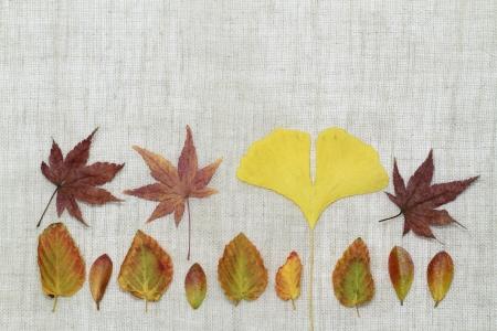 dead leaves: Fondo de la imagen de la disposici�n _ finales del oto�o de las hojas muertas