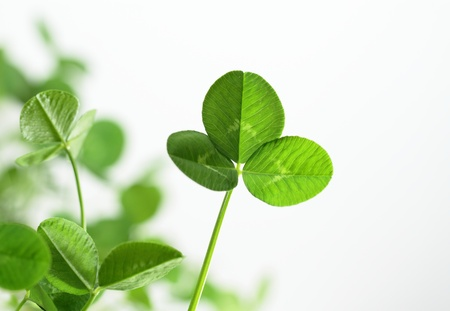 Background of a green clover