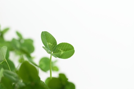 Background of a green clover Stock Photo - 16924059
