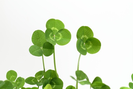 Background of a green clover Stock Photo - 16924062