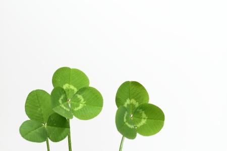 dutch clover: Background of a green clover