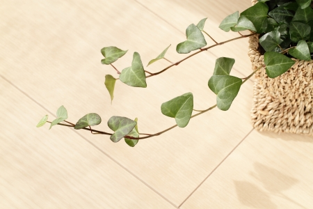 Leaf of the ivy of the living floor_Interior image Stock Photo
