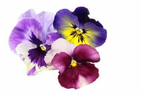 Background _ Valentine s Day image of the pansy