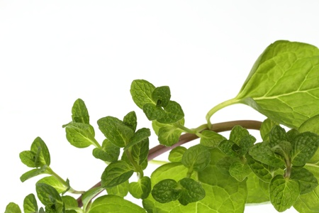 new medicine: Background of the climbing nature mint leaves
