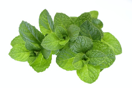 Young leave of the mint of the herb of the white background