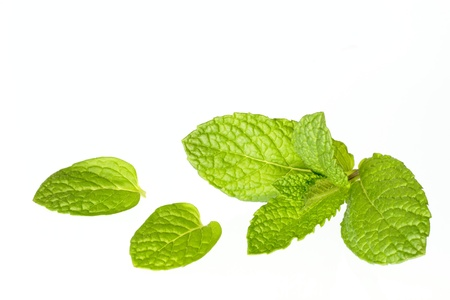 Spearmint of the kitchen herb of the white background Stock Photo