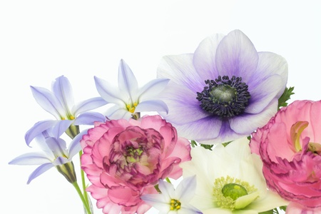 Flower arrangement of an anemone and a ranunculus and the spring starflower