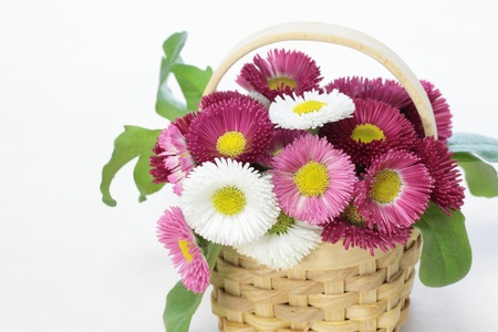 Flower basket of Daisy photo