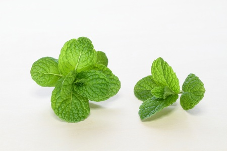 young leave: Young leave of the mint of the herb Stock Photo