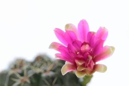 fleshy: Red flower of the fleshy plant Stock Photo
