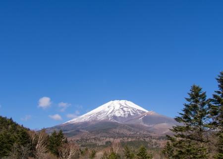 madera pino: Madera de pino y hermoso Monte Fuji