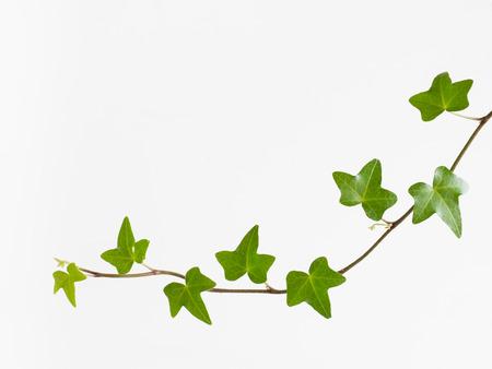 liana: Refreshing green liana