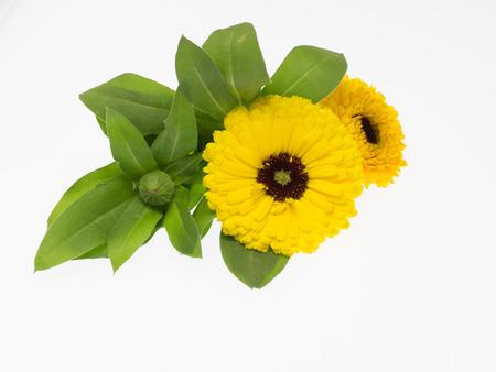Yellow pot Marigold