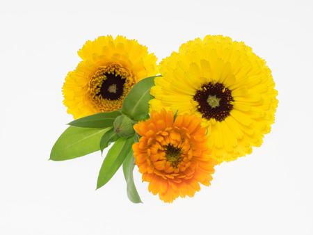 Natural pot Marigold