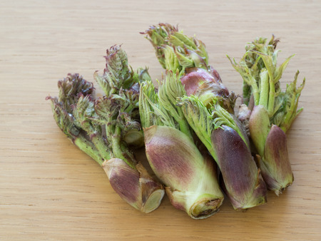 Japanese edible wild plant_Bud of the Japanese angelica tree