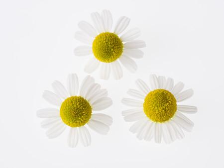 german chamomile: Pretty herb Chamomile on white back Stock Photo