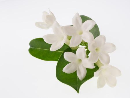 Sweet fragrance Malagasy jasmine isolated on white background Zdjęcie Seryjne