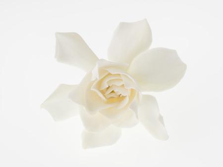 Beautiful white gardenia isolated on white background Zdjęcie Seryjne