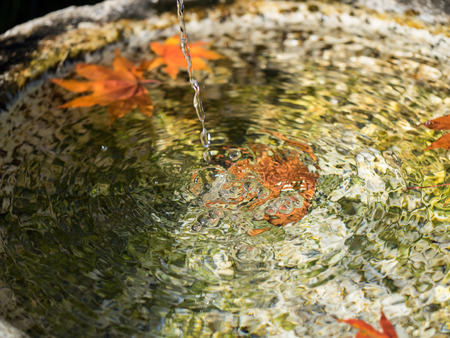 Spring water and dead leaves in the Japanese traditional garden washbowl Stock Photo