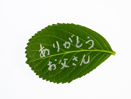 dada: Message written on the leaf_Thanks Dada