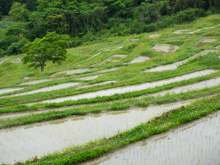 Tanada full of water for rice growing in early summer Japan