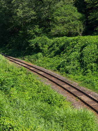 forest railroad: Single railroad line running in the green forest in the country of Japan