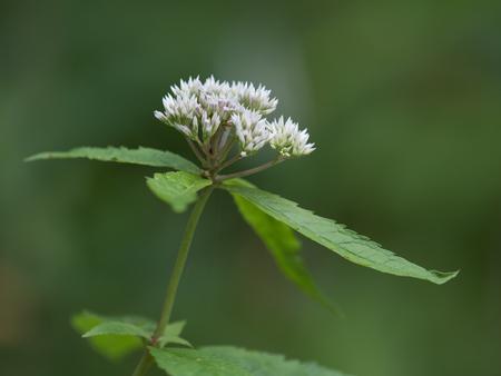 Wild flowers blooming in high-rise wetlands in Japan