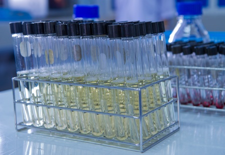 tissue culture test-tube filled with culture media Stock Photo - 13117250