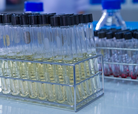 tissue culture test-tube filled with culture media Stock Photo - 13100590