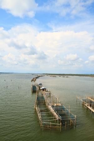 fish farming: la piscicultura