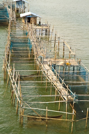 fish farming photo