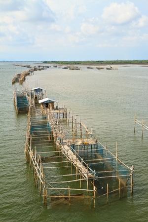 fish farming photo
