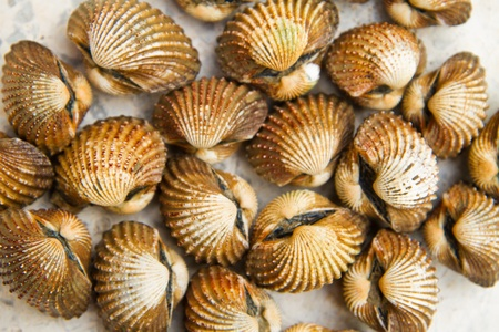 shells  on background Stock Photo