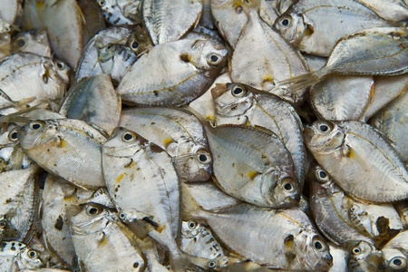 Sea fish  on  background Stock Photo - 13324971