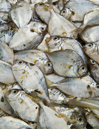 Sea fish  on  background Stock Photo - 13324912
