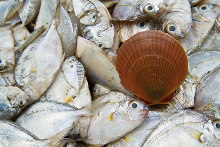 Sea fish and shell on  background Stock Photo - 13324906