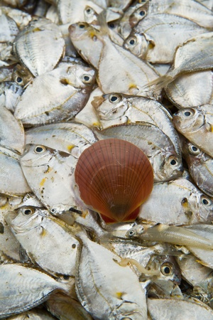 Sea fish and shell on  background Stock Photo - 13324916