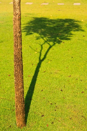 trunk tree and its shadow on green grass Stock Photo - 13507830