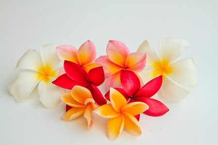 tropical flowers: flower plumeria isolated on white background