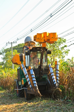 Sugar cane harvesting in Thailand