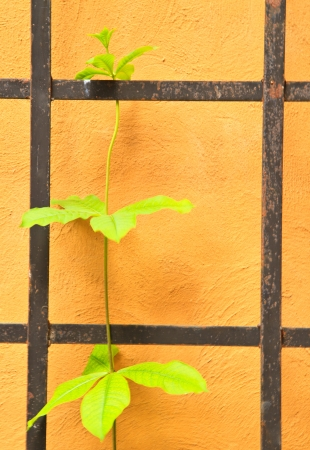 tendril on yellow background photo