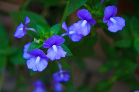 violet flowers photo