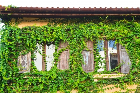 Ivy clad house photo